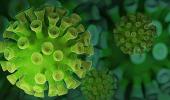 Подсчитан примерный срок жизни антител к COVID-19