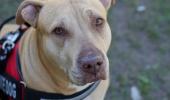 Эксперименты подтвердили, что собаки распознают больных COVID-19 лучше многих тестов